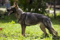 Arabella von Donauwolf